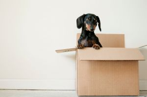 8 Exciting Steps to Moving House Successfully